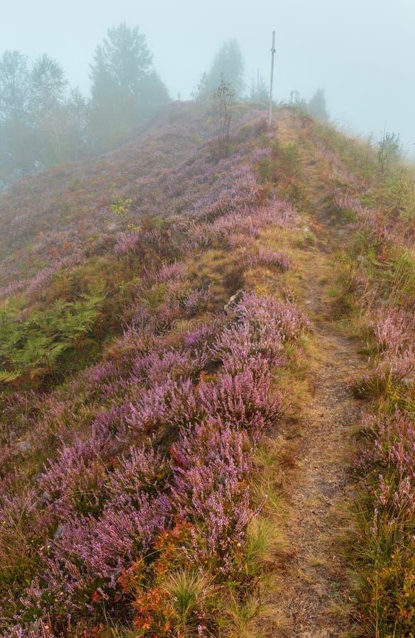 Nebelhafter Morgentau auf Bergwiese stockbilder