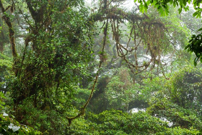 Nebelhafter Regenwald in der Monteverde-Wolken-Waldreserve lizenzfreie stockfotografie