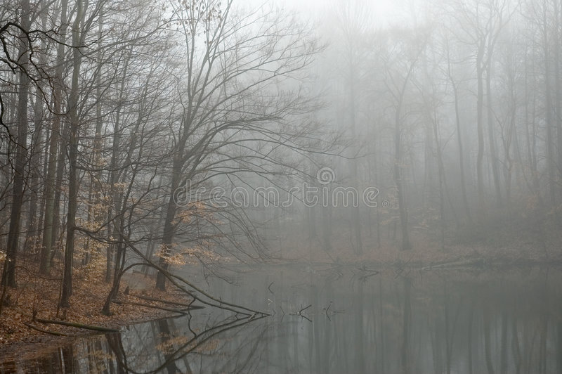 Nebelhafter See   stockbilder