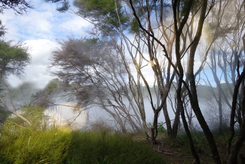 Nebelhafter See und Wald in Rotorua, Neuseeland stockfoto