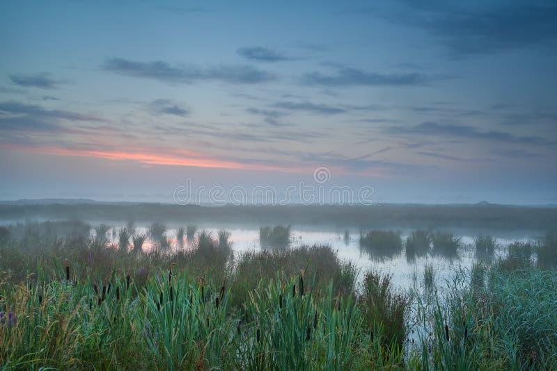 Nebelhafter Sonnenaufgang des Sommers über Sumpf stockfotos