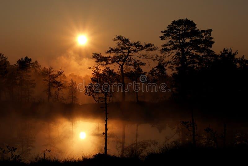 Nebelhafter Sonnenaufgang im Viru Sumpf lizenzfreie stockfotografie