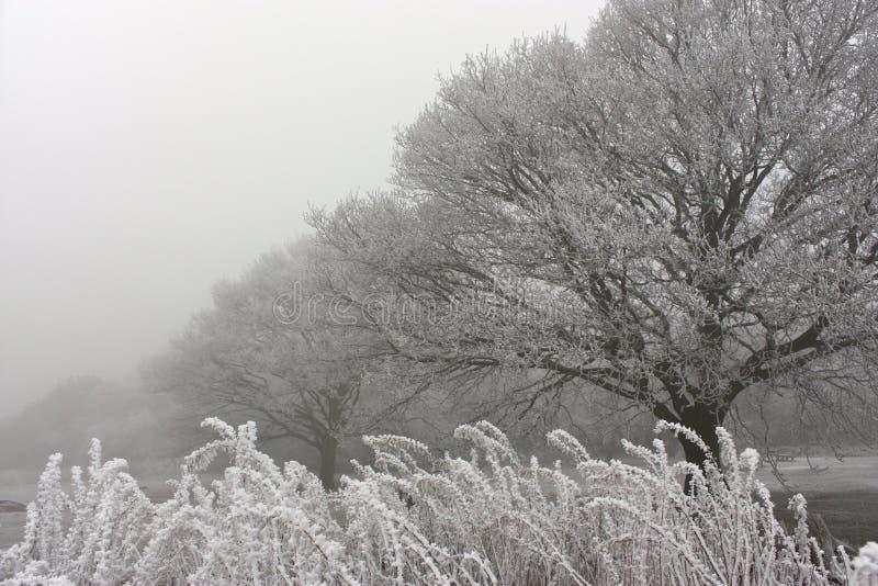 Nebelhafter u. eisiger Morgen im Wald stockbild