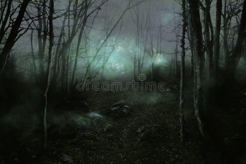 Nebelhafter Wald stock abbildung