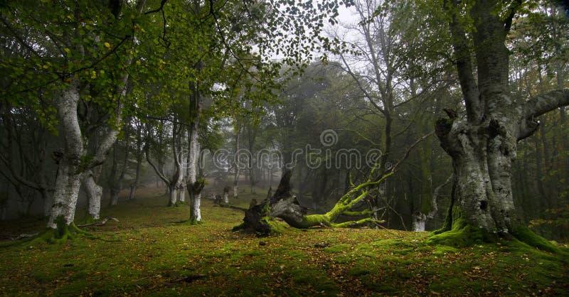 Download Nebelhafter Wald stockbild. Bild von grün, wanderung - 27727245
