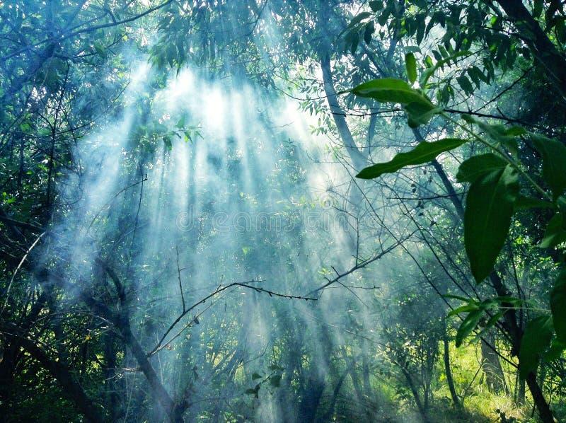Nebelhafter Wald stockbilder