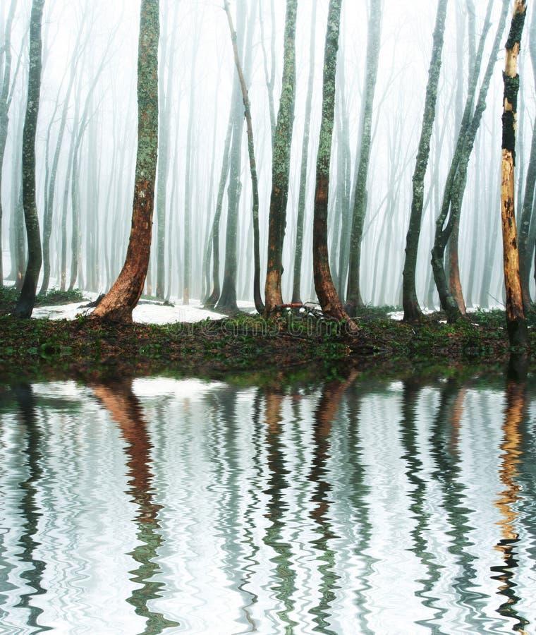 Nebelhafter Wald lizenzfreies stockbild