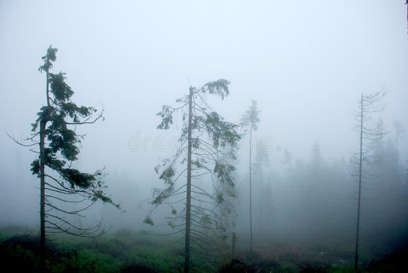 Nebelhafter Wald in den Bergen lizenzfreie stockfotografie