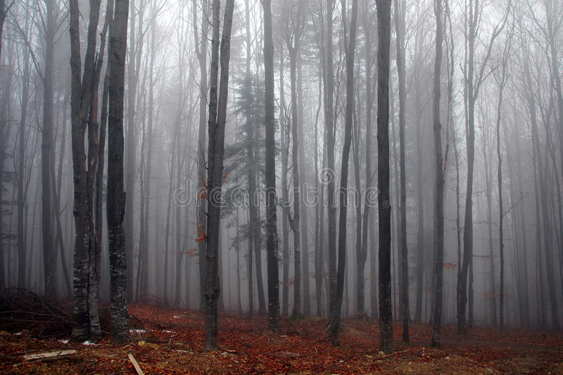 Nebelhafter Wald im Herbst stockfotos