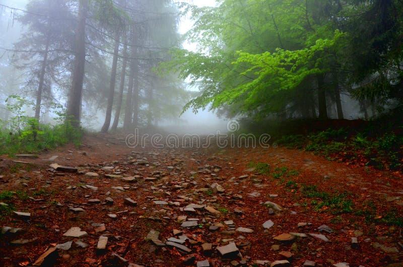 Nebelhafter Waldweg in den Bergen morgens stockfotografie