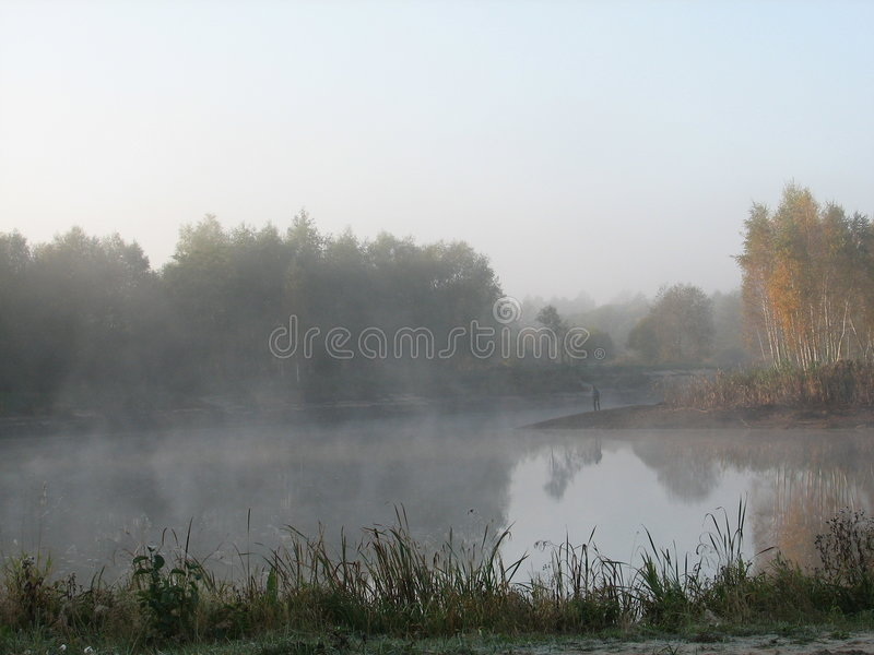 Nebelhafter, wilder Naturmorgen lizenzfreie stockfotos