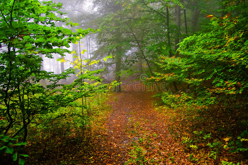 Nebelhaftes Holz stockfotografie