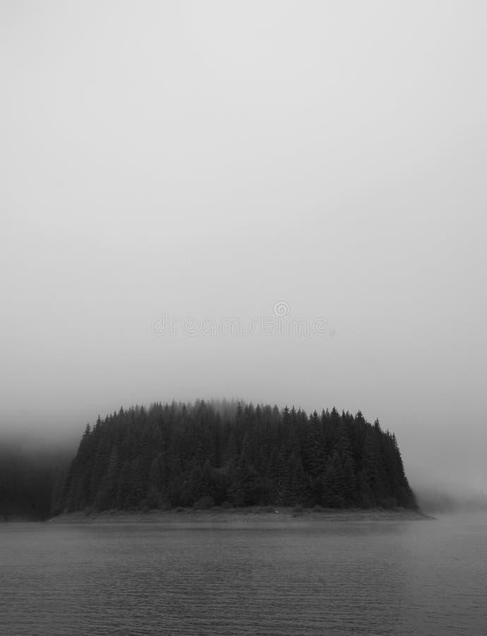 Nebelhaftes Holz stockbilder