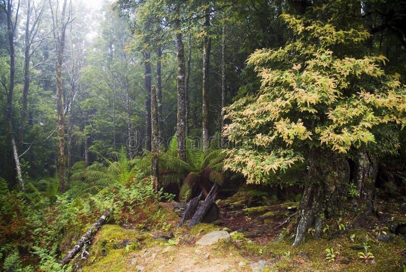 Nebelhaftes Holz lizenzfreie stockbilder