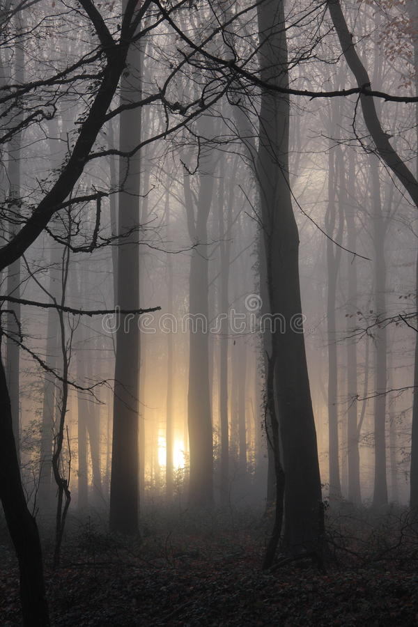 Nebelhaftes Morgenwaldportrait stockbild