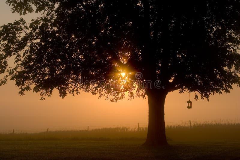 Nebelhaftes Mornin stockbilder