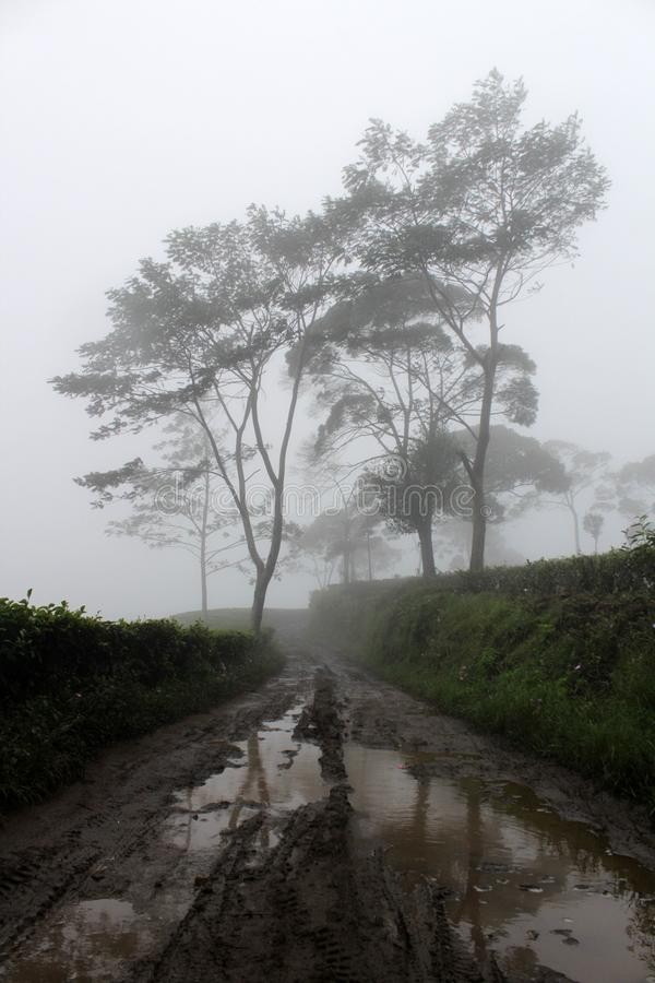 Nebelig auf Sukawana-Fahrrad-Park lizenzfreie stockfotografie