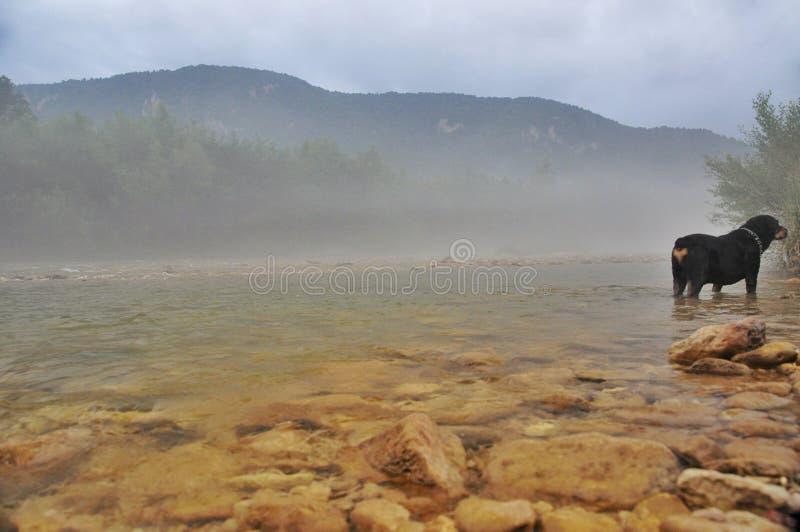 Nebelig am Gebirgsfluss Kurdzhips und am Hund-rottweiler lizenzfreie stockbilder