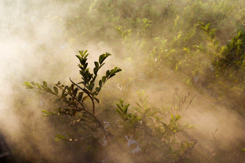 Nebelig im Garten stockfotografie