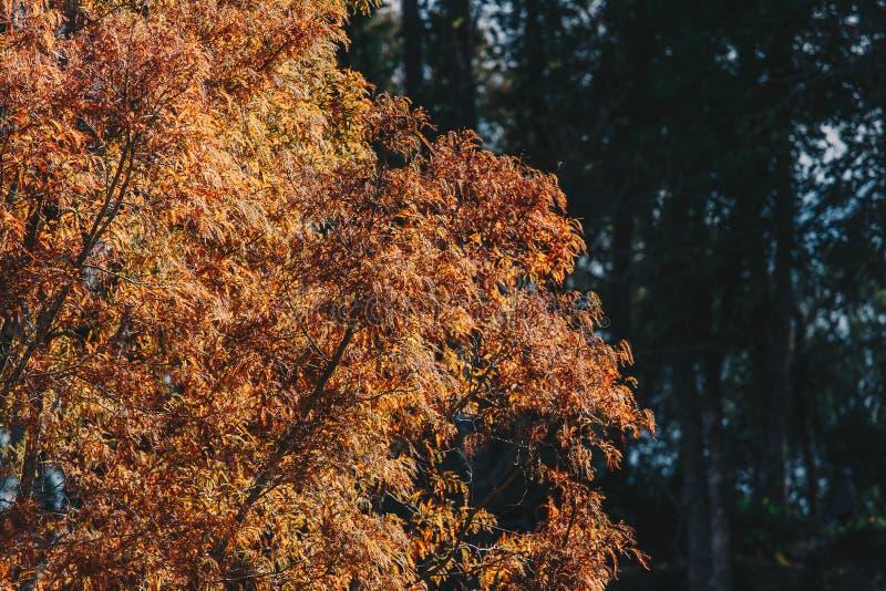 Nebelige B?ume in einem Wald lizenzfreie stockbilder