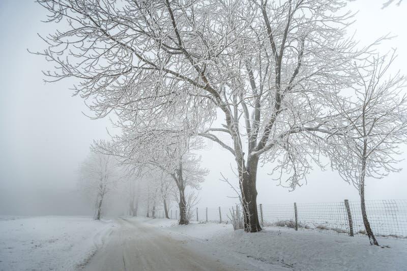 Nebelige/eisige Winterstraße mit Bäumen lizenzfreie stockbilder