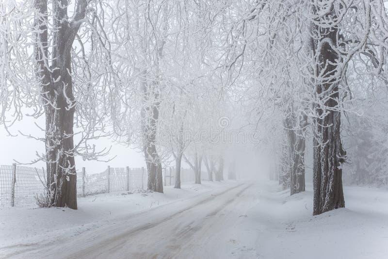 Nebelige/eisige Winterstraße mit Bäumen lizenzfreies stockfoto