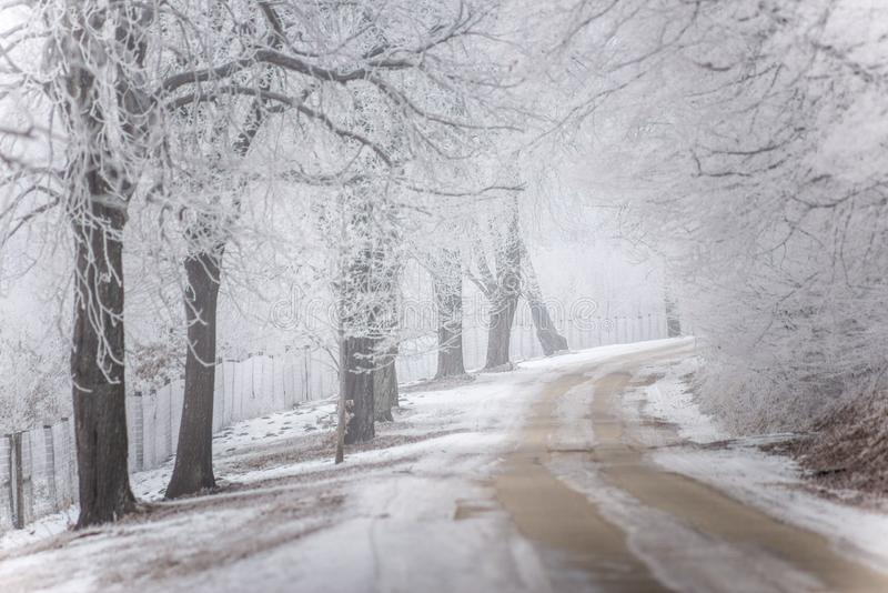 Nebelige/eisige Winterstraße mit Bäumen stockbild