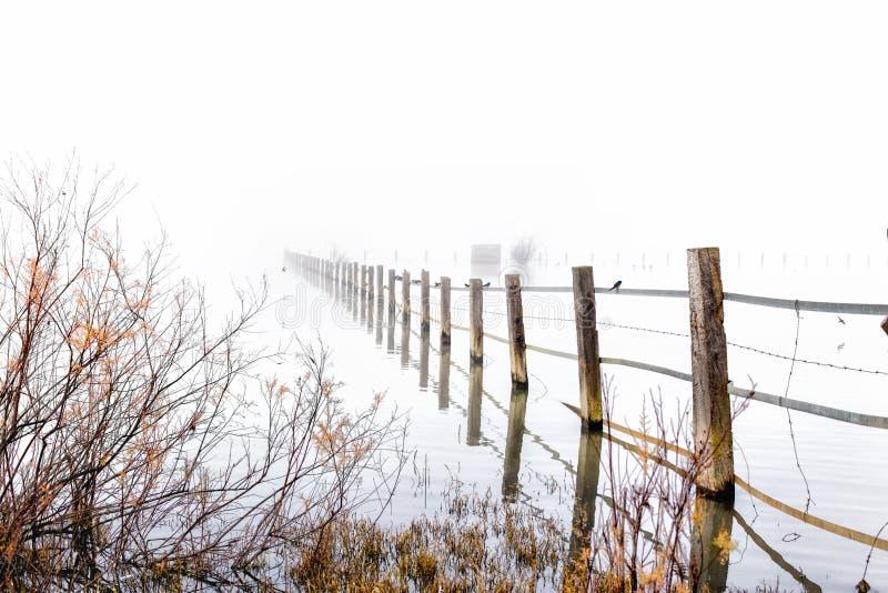 Nebelige Landschaft in den Sümpfen Nationalparks Doñana Huelva, Spanien Holz im Wasser lizenzfreie stockfotografie