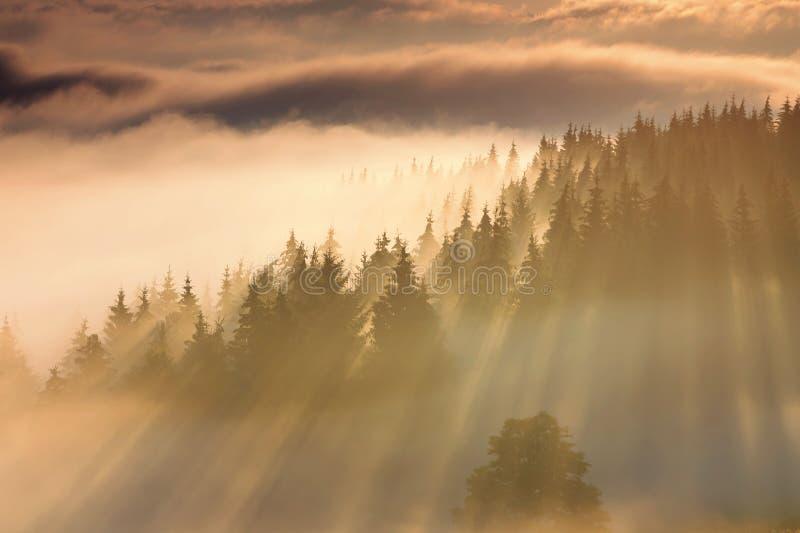 Nebelige Landschaft des von hinten beleuchteten Tageslichtes lizenzfreie stockbilder