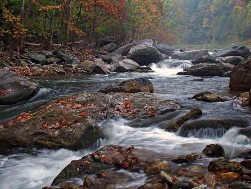 Download Nebelige River-Szene stockbild. Bild von fall, bäume, nebelig - 49899