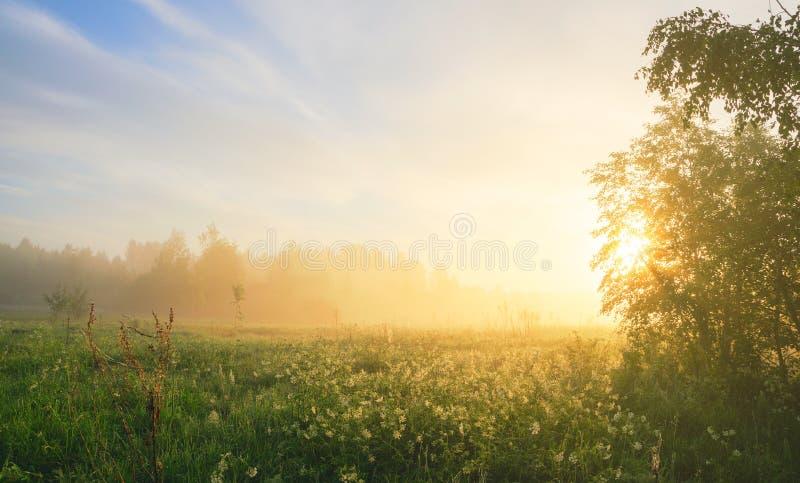 Nebelige Sommerlandschaft mit dem Waldrasen und -sonne, die durch die Baumaste scheinen lizenzfreie stockfotografie