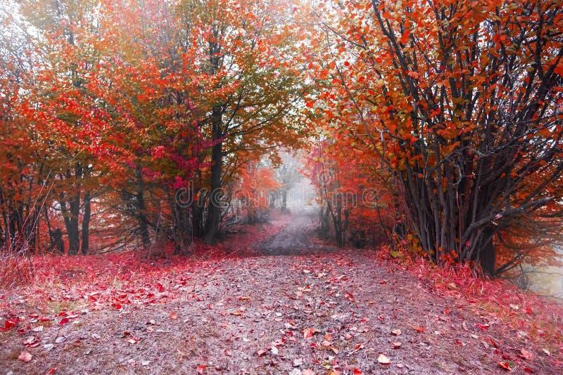 Nebelige Straße im roten Herbstwald stockfoto