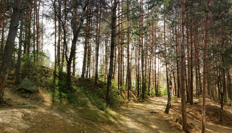 Nebelige wilde Holzlandschaft in Ukraine lizenzfreies stockbild
