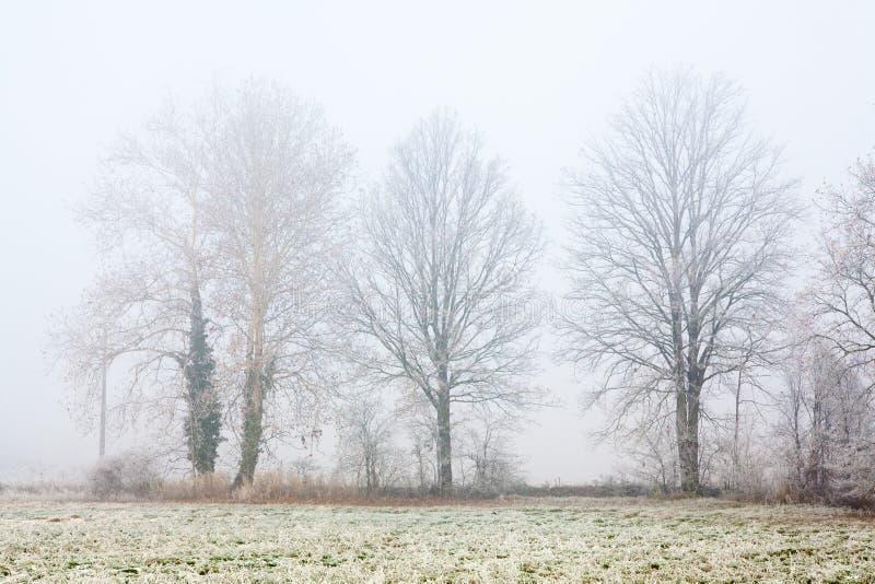 Nebelige Winter-Bäume stockfotos