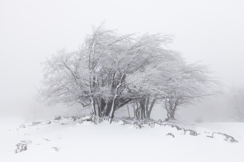 Nebelige Winterlandschaft im Wald stockfotos