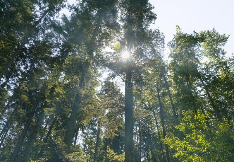 Nebeliger Frühlingsmorgen im schönen Wald lizenzfreie stockfotografie