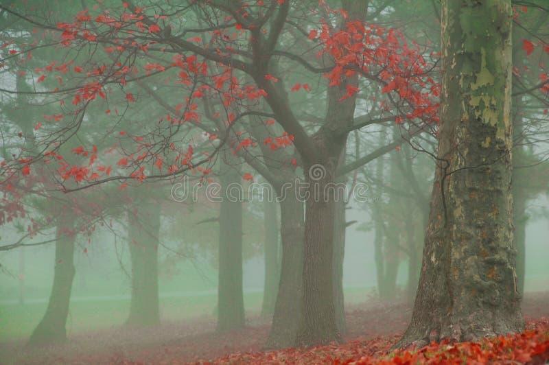 Nebeliger Herbst-Morgen stockfotografie