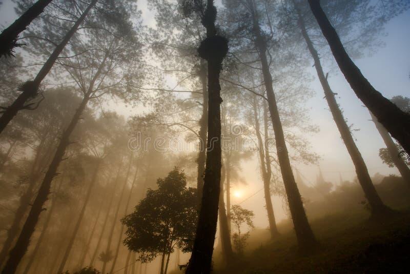 Nebeliger Morgen bei Puncak Lawang stockfotos