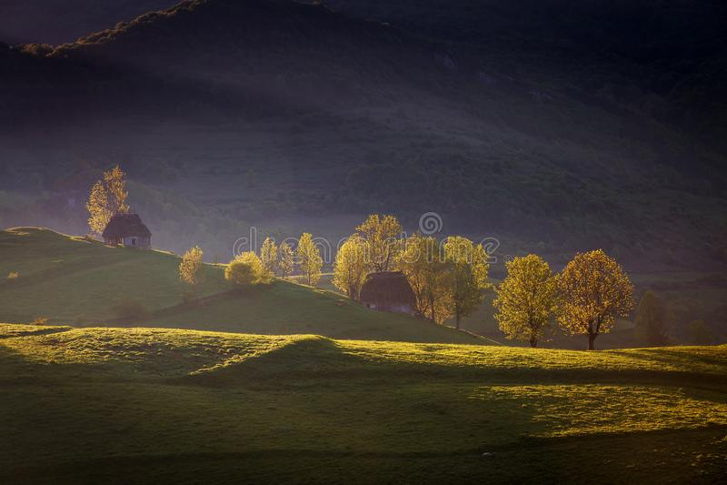 Nebeliger Morgen des Frühlinges am Waldrand lizenzfreies stockbild