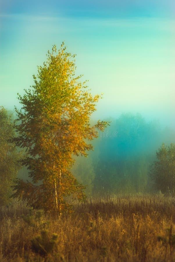 Nebeliger Morgen des Herbstes stockfotos