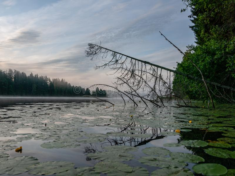 Nebeliger Morgen im Seebereich stockbilder