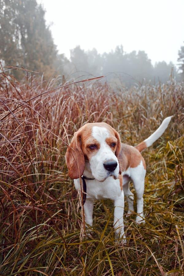 Nebeliger Morgen im Wald stockfotos