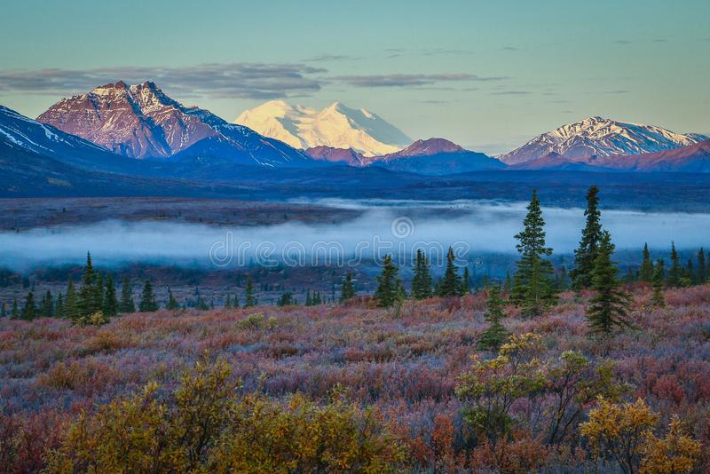 Nebeliger Morgen in Nationalpark Denali, Alaska stockfotos