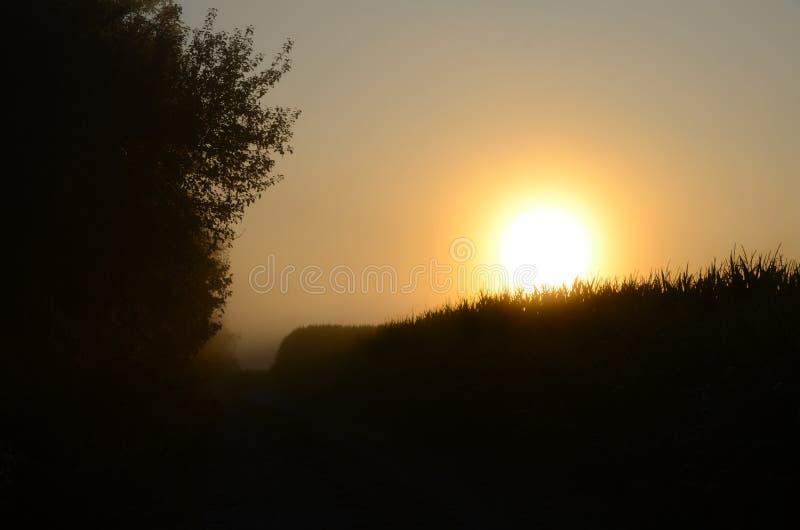 Nebeliger Morgensonnenaufgang über einer Maisfeld-Traktorstraße lizenzfreie stockfotos