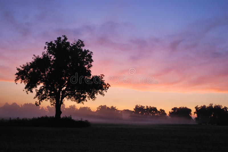 Nebeliger Oklahoma-Sonnenaufgang stockfotos