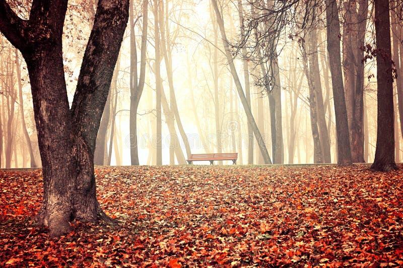Nebeliger Park des Herbstes - schöne Herbstlandschaft stockbild