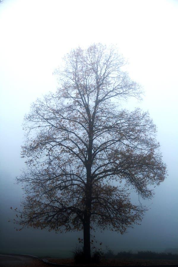 Nebeliger Park morgens stockbild