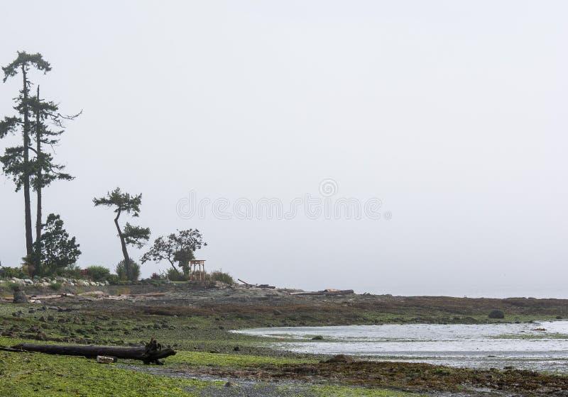Nebeliger pazifischer Nordwesten stockfotografie