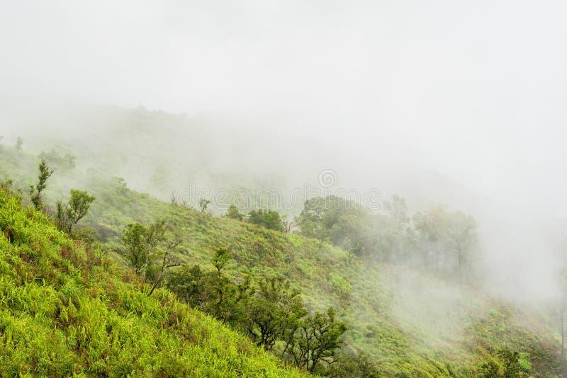 Nebeliger Regenwald auf einem Berghang in einem Nationalpark auf Morgen lizenzfreie stockfotografie