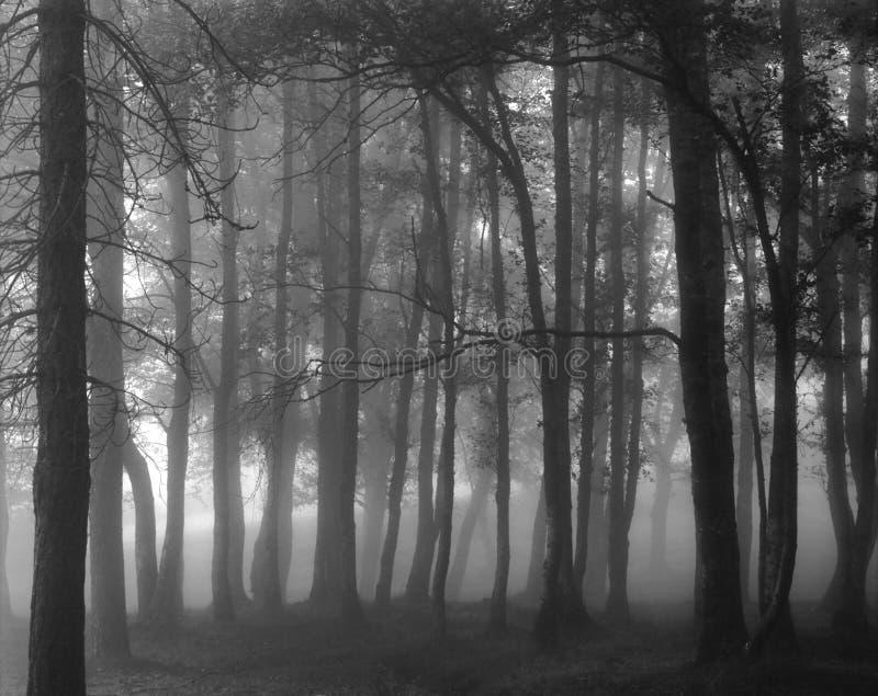 Nebeliger Schwarzweiss-Wald lizenzfreies stockbild